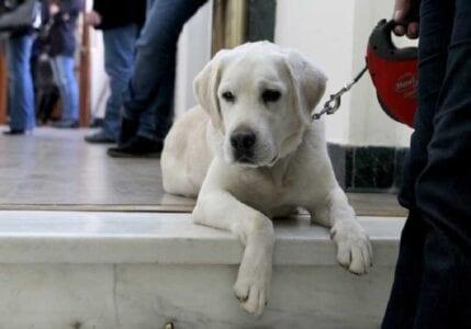 Πτολεμαΐδα: Φόλες σε κυνηγότοπο – Δηλητηριάστηκαν κυνηγετικοί και ποιμενικοί σκύλοι