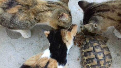 Η χελώνα και η γάτα, μια ιστορία συμβίωσης και η αμοιβαία αποδοχή της διαφορετικότητας. (Γράφει ο Αλέξανδρος Κων. Κοκκινίδης) 2