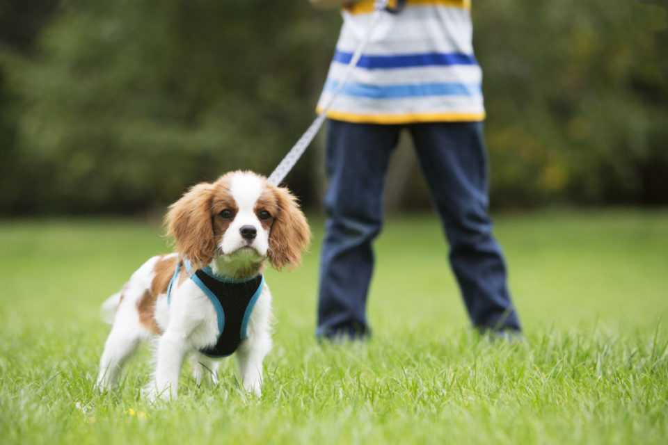 Επτά μύθοι (και οι αλήθειες) για τη βόλτα του σκύλου 2