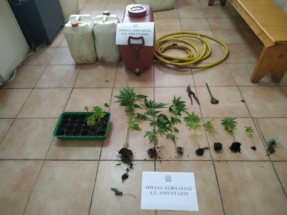 Συνελήφθη 48χρονος για καλλιέργεια -16- δενδρυλλίων κάνναβης 1