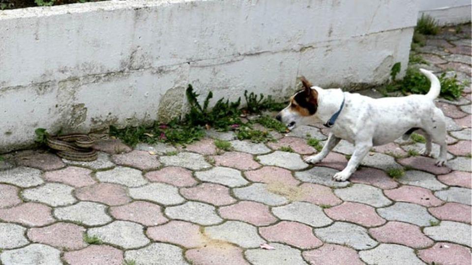 Καστοριά: Ηρωικό σκυλάκι έσωσε τα αφεντικά του από φίδι! 1
