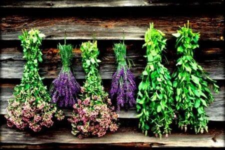 Ο Δήμος Κοζάνης στηρίζει έμπρακτα τον πρωτογενή τομέα - Σύμπραξη Δήμου και ΕΛΓΟ-Δήμητρα για την ανάδειξη και διαπίστευση Αρωματικών Φαρμακευτικών φυτών της Κοζάνης 1
