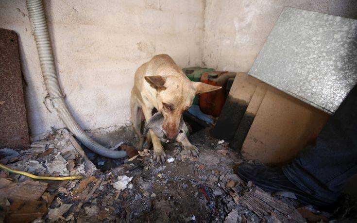Η σκυλίτσα που έσωσε τα κουτάβια της από την φωτιά στον Υμηττό 4