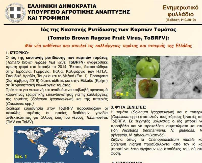 """Ενημερωτικό φυλλάδιο του επιβλαβούς οργανισμού """"Ιός της καστανής ρυτίδωσης των καρπών της τομάτας"""" (Tomato Brown Rugose Fruit Virus – ToBRFV) 1"""