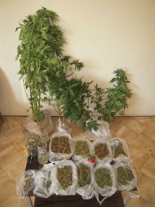 Σύλληψη 47χρονου ημεδαπού, σε περιοχή των Γρεβενών, για καλλιέργεια δενδρυλλίων κάνναβης και κατοχή ναρκωτικών ουσιών 1
