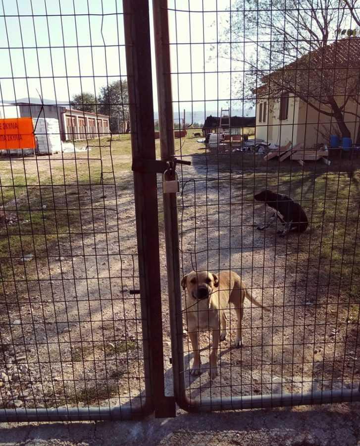 Εθελοντές Κυνοκομείου Πτολεμαΐδας :ΤΑ ΚΛΕΙΔΙΑ ΤΟΥ ΔΗΜΟΤΙΚΟΥ ΚΥΝΟΚΟΜΕΙΟΥ - ''Μέχρι σήμερα δεν είδαμε καμία εργασία στον χώρο που βρίσκονται τα έγκλειστα ζώα'' 1