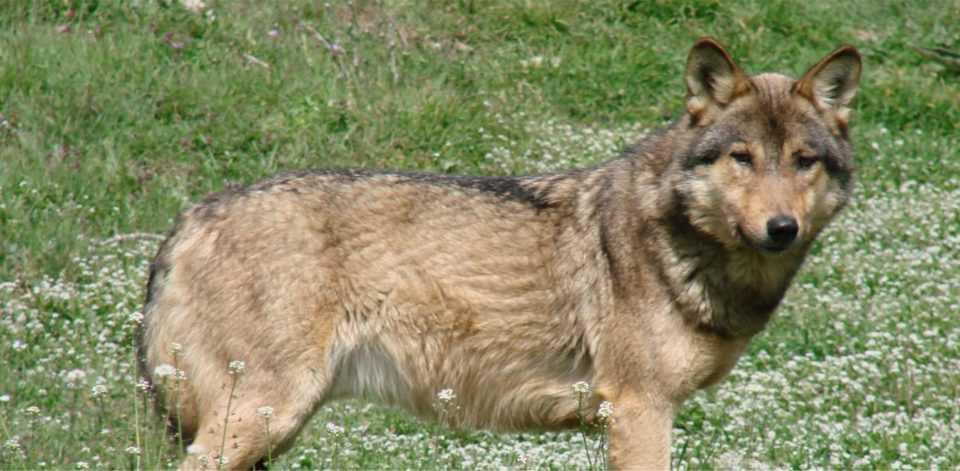 Κοζάνη: «Νύχτα των Λύκων» στην Καλαμιά - Κλειδώθηκαν σε καφενείο οι κάτοικοι 1