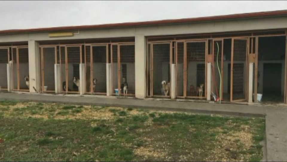 Πτολεμαίδα: Νομιμοποιείται το Δημοτικό Κυνοκομείο- Δεν υπάρχουν κονδύλια για τις στειρώσεις αδέσποτων σκύλων 1
