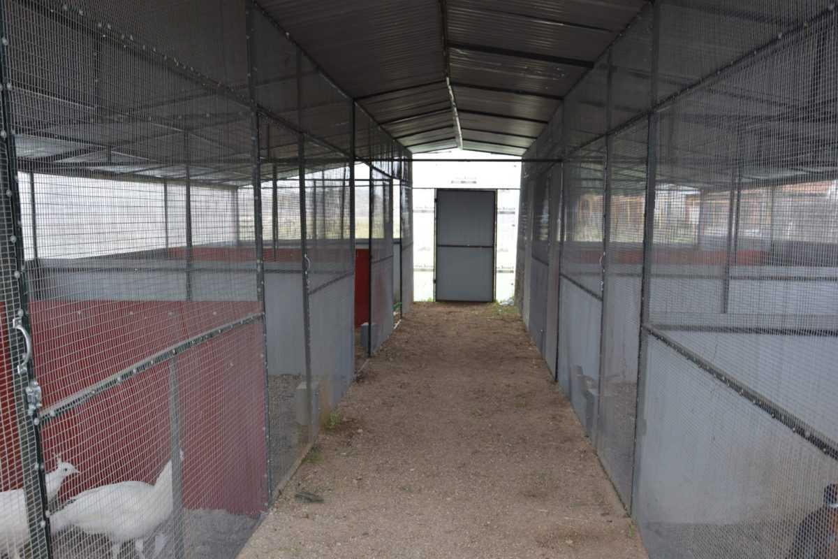 πτολεμαΐδα: επιχείρηση εκτροφείο θηραμάτων της χρυσούλας πεντίδου - το μοναδικό εκτροφείο στην περιοχή ! (φωτογραφίες) 42