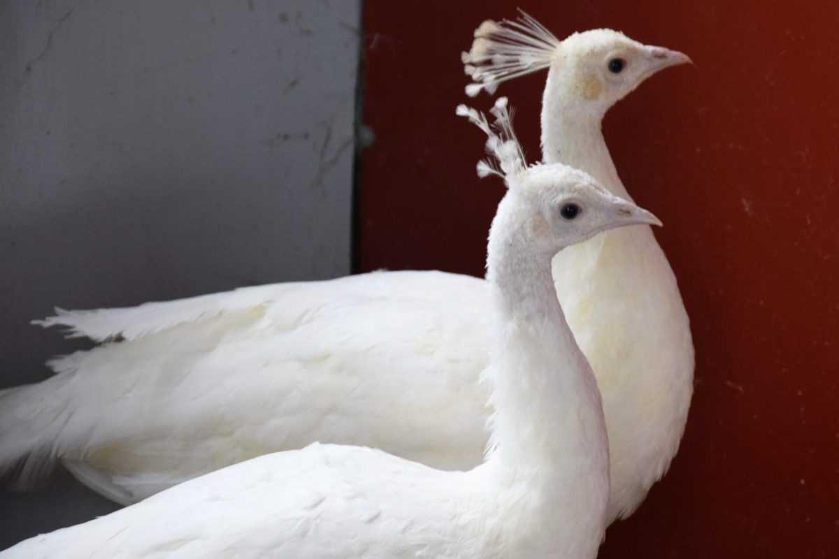 Πτολεμαΐδα: Επιχείρηση Εκτροφείο Θηραμάτων της Χρυσούλας Πεντίδου - Το μοναδικό εκτροφείο στην περιοχή ! (φωτογραφίες) 27