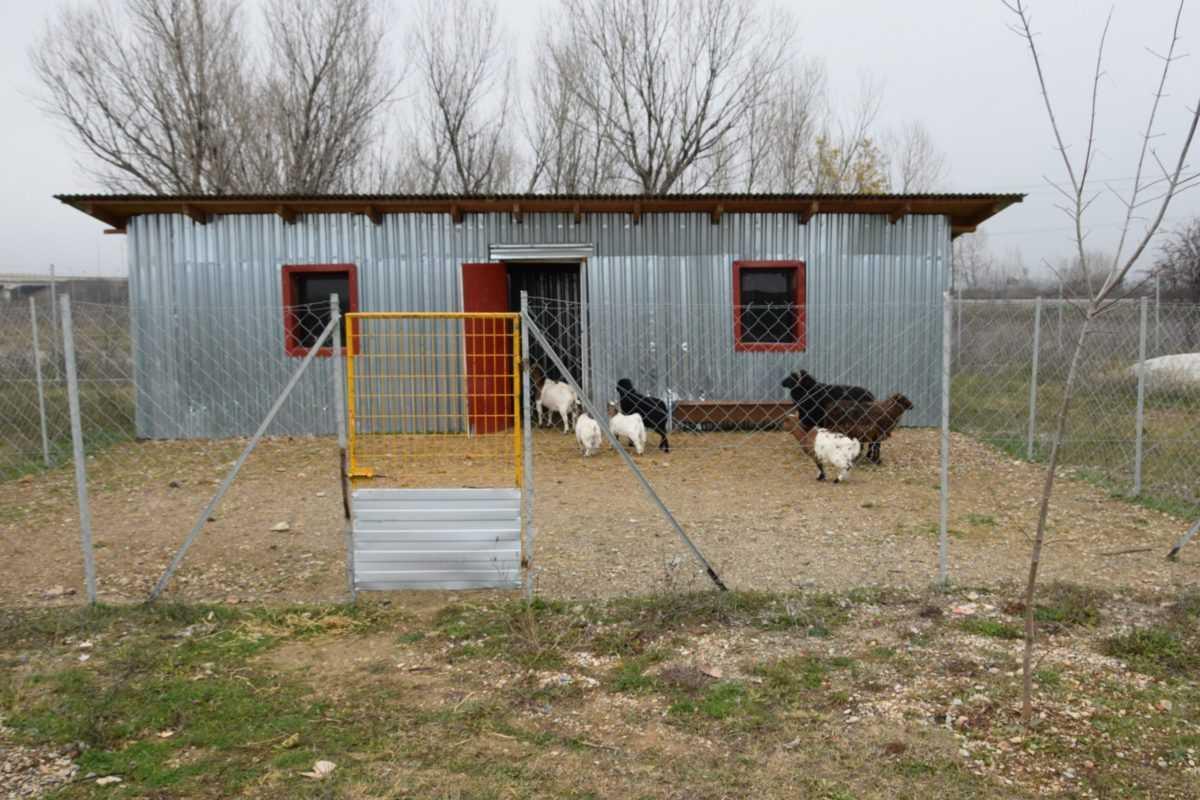πτολεμαΐδα: επιχείρηση εκτροφείο θηραμάτων της χρυσούλας πεντίδου - το μοναδικό εκτροφείο στην περιοχή ! (φωτογραφίες) 39
