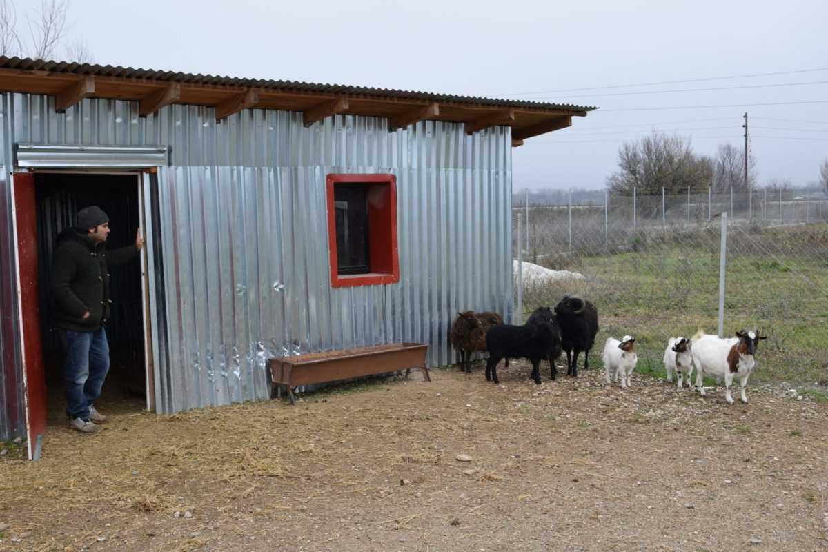 πτολεμαΐδα: επιχείρηση εκτροφείο θηραμάτων της χρυσούλας πεντίδου - το μοναδικό εκτροφείο στην περιοχή ! (φωτογραφίες) 37