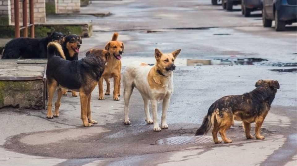 Ποιοι Δήμοι χρηματοδοτούνται για τη λειτουργία καταφυγίων αδέσποτων ζώων (εκτός ο Δήμος Εορδαίας-λίστα) 1