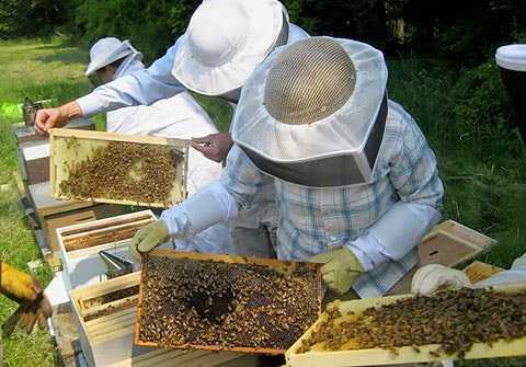 Eκλογές - Αποτελέσματα Μελισσοκομικού συλλόγου Κοζάνης