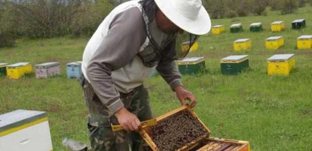 Ανακοίνωση - Υπενθύμιση Μελισσοκομικού Συλλόγου Κοζάνης