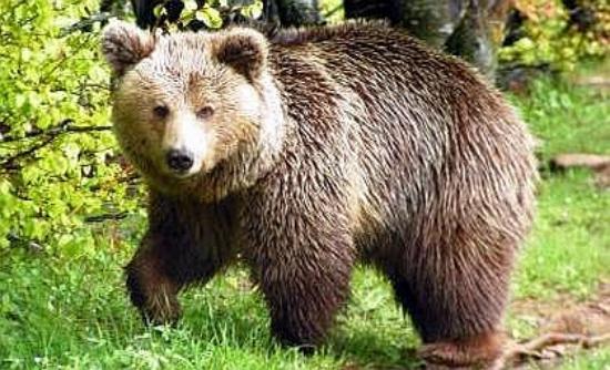 Εορδαία: Mικρή αρκούδα αναζητούσε τροφή στο κέντρο του Μηλοχωρίου