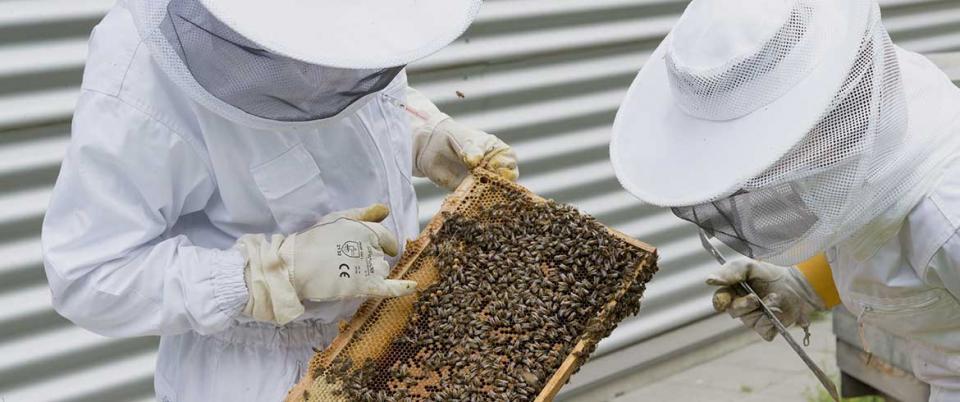 Επιστολή από έναν παλιό μελισσοκόμο