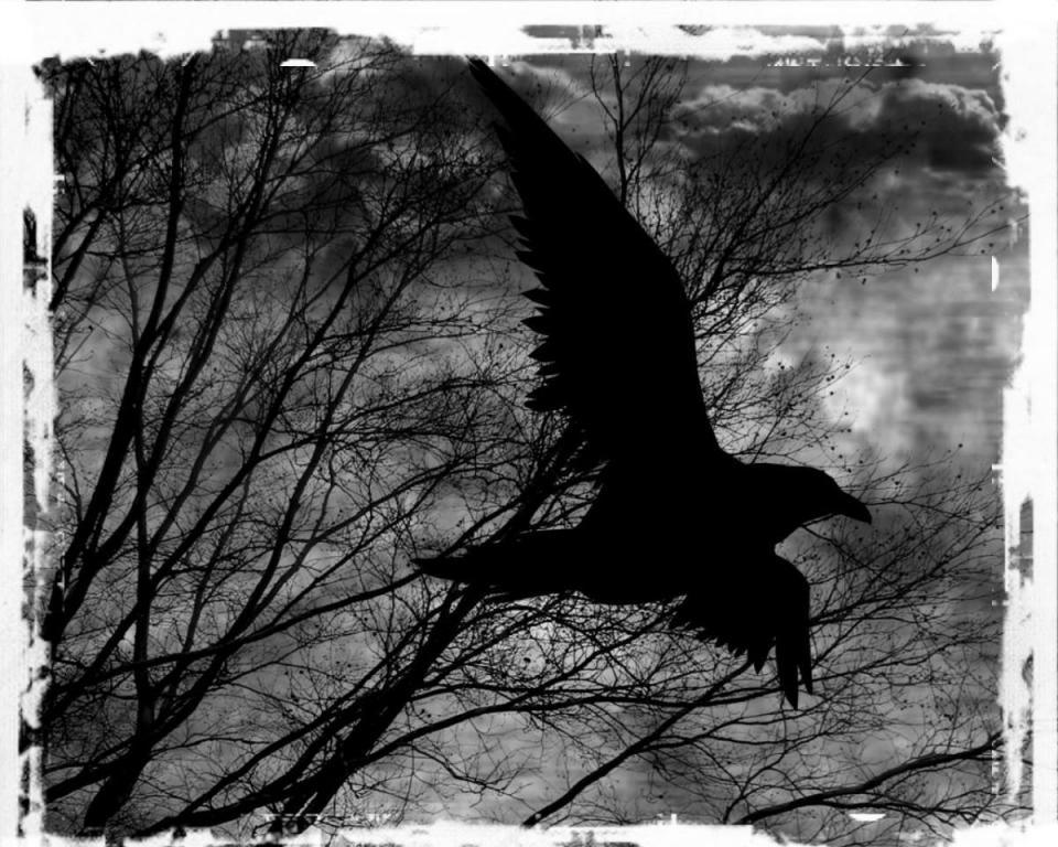 Πτολεμαΐδα : Λογοτεχνικό ποίημα '' ΤΟ ΚΟΡΑΚΙ''