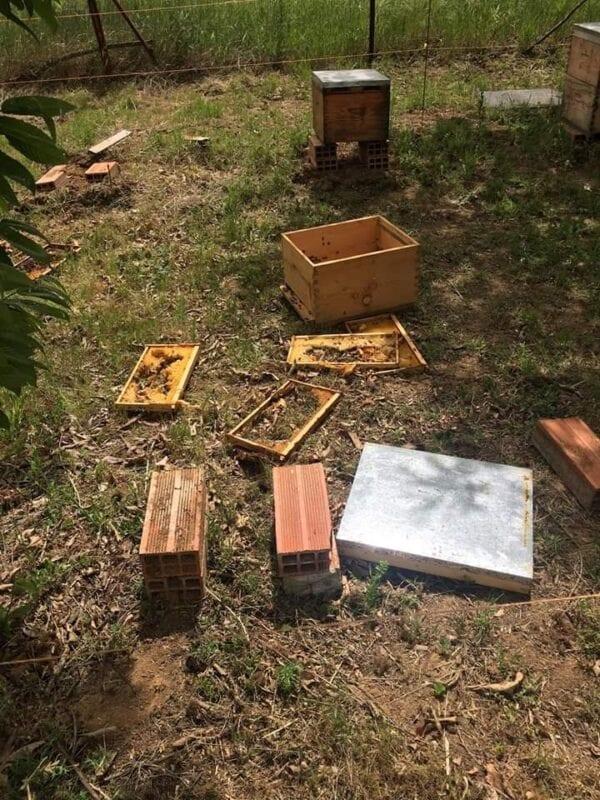 Εορδαία: Επίθεση σε εγκαταστάσεις δύο Μελισσοκόμων