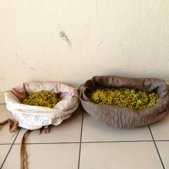 Σύλληψη δύο αλλοδαπών, σε περιοχή του ορεινού όγκου της Καστοριάς, για παράνομη συλλογή ποσότητας αρωματικού-θεραπευτικού φυτού