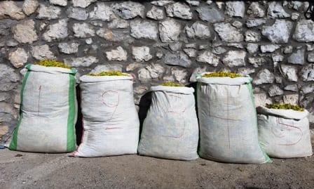 Σύλληψη τεσσάρων αλλοδαπών, σε περιοχή του ορεινού όγκου της Καστοριάς, για παράνομη συλλογή ποσότητας αρωματικού-θεραπευτικού φυτού
