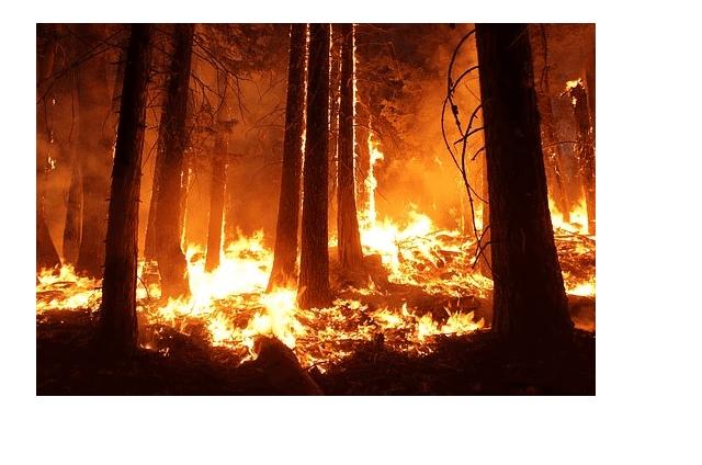 Δήμος Κοζάνης: Προληπτικά μέτρα για την αποφυγή δασικών πυρκαγιών