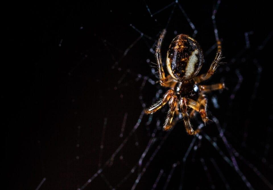 Τρόμος από τσιμπήματα μαύρης αράχνης στην Ελλάδα: Κινδύνεψε βρέφος 10 μηνών