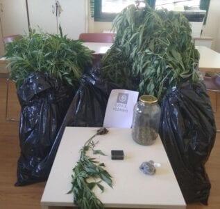 Συνελήφθησαν δύο άτομα σε περιοχή της Κοζάνης για καλλιέργεια και κατοχή ναρκωτικών ουσιών
