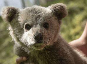 Νεαρό αρκουδάκι εγκλωβίστηκε σε αυλή οικίας στην Τ.Κ. Ομαλής της Δ.Ε. Τσοτυλίου του Δήμου Βοΐου