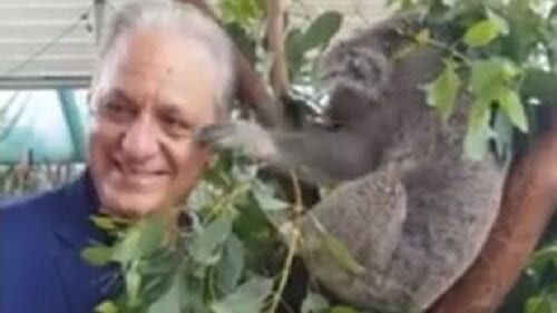 Viral: Κοάλα «χαστούκισε» Κύπριο βουλευτή