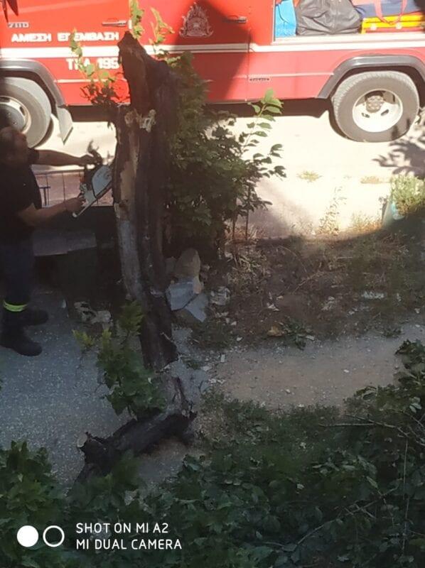 Πτολεμαΐδα : Έσπασε δέντρο από τον αέρα!! (φωτογραφίες) 13