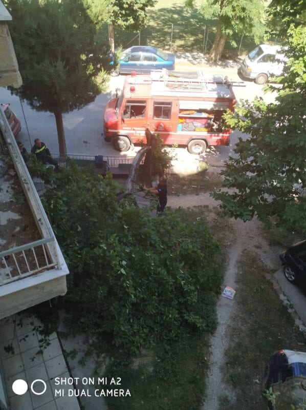 Πτολεμαΐδα : Έσπασε δέντρο από τον αέρα!! (φωτογραφίες) 11