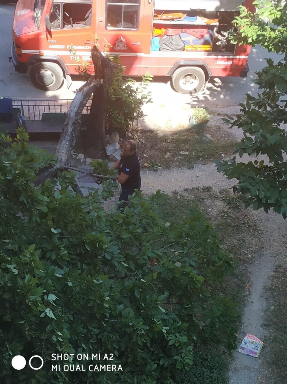 Πτολεμαΐδα : Έσπασε δέντρο από τον αέρα!! (φωτογραφίες)