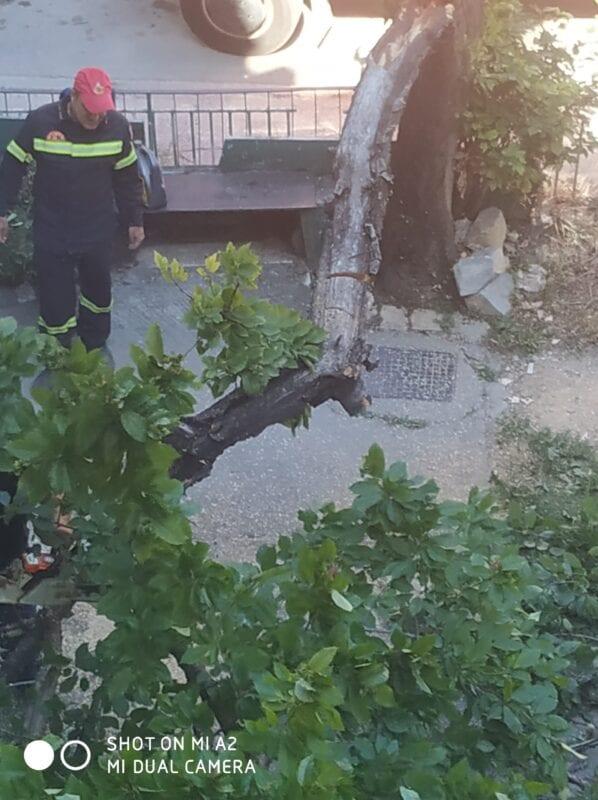 Πτολεμαΐδα : Έσπασε δέντρο από τον αέρα!! (φωτογραφίες) 15