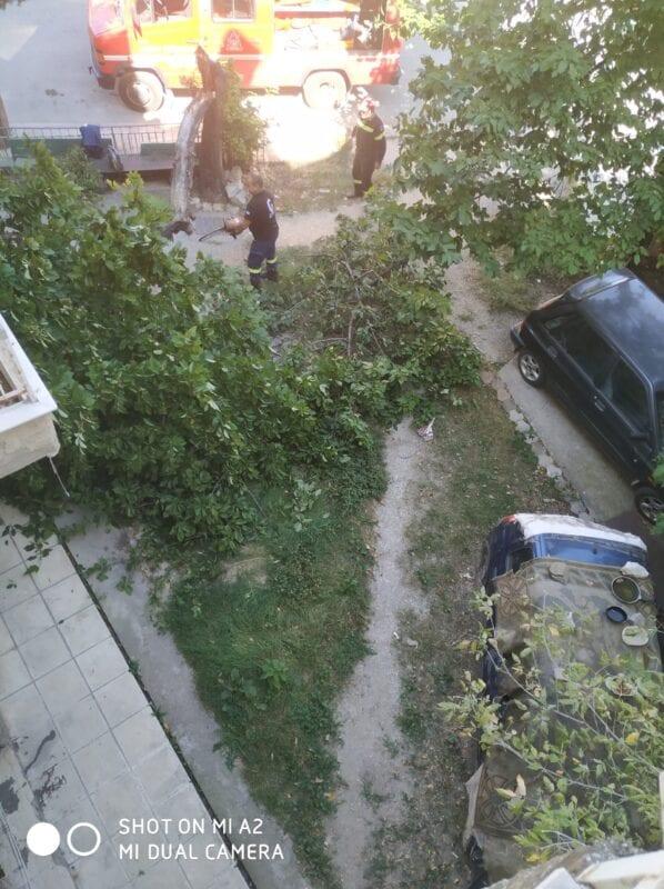 Πτολεμαΐδα : Έσπασε δέντρο από τον αέρα!! (φωτογραφίες) 9