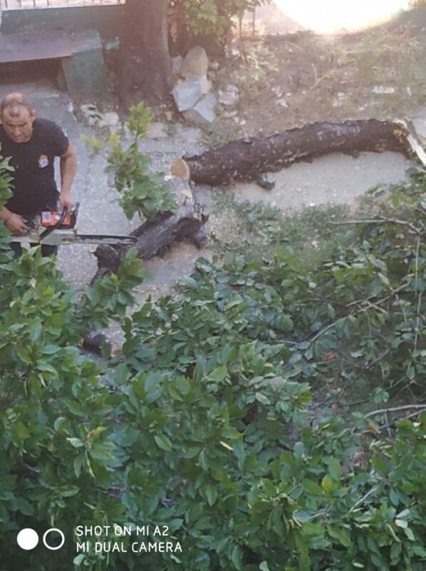 Πτολεμαΐδα : Έσπασε δέντρο από τον αέρα!! (φωτογραφίες) 14