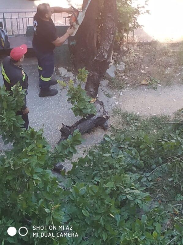 Πτολεμαΐδα : Έσπασε δέντρο από τον αέρα!! (φωτογραφίες) 16