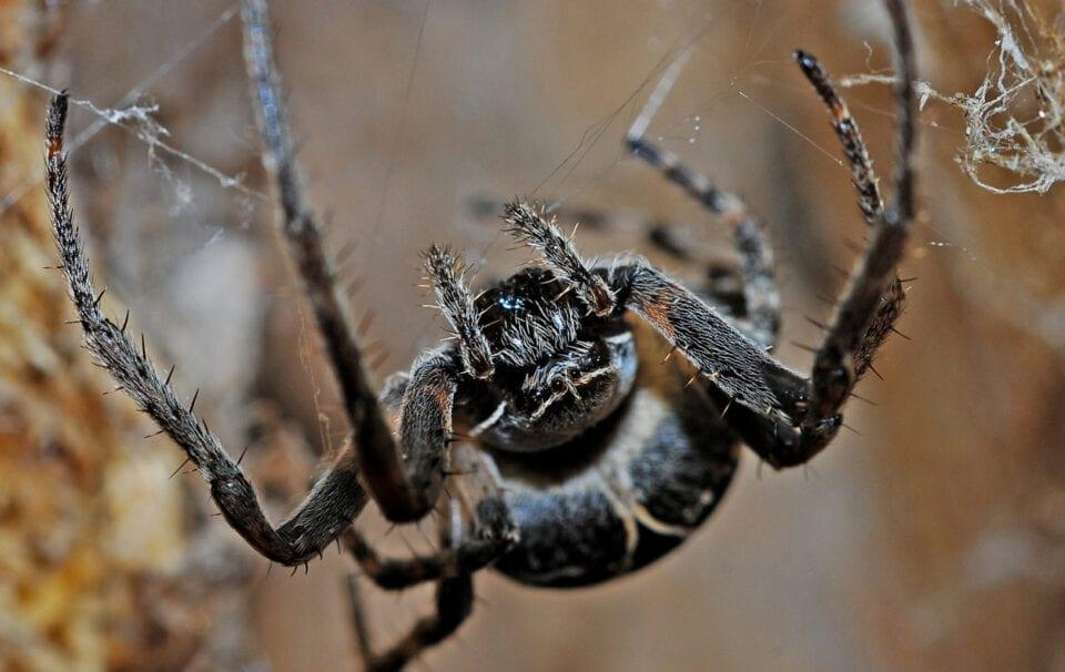 Πάτρα: Στο νοσοκομείο άνδρας μετά από τσίμπημα μαύρης αράχνης