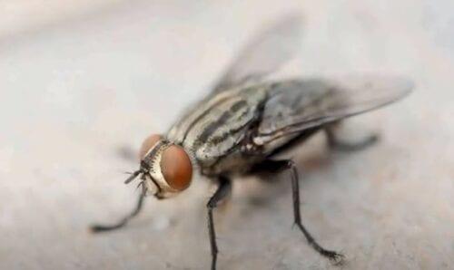 Ανατίναξε το σπίτι του στην προσπάθειά του να… σκοτώσει μια μύγα (βίντεο)