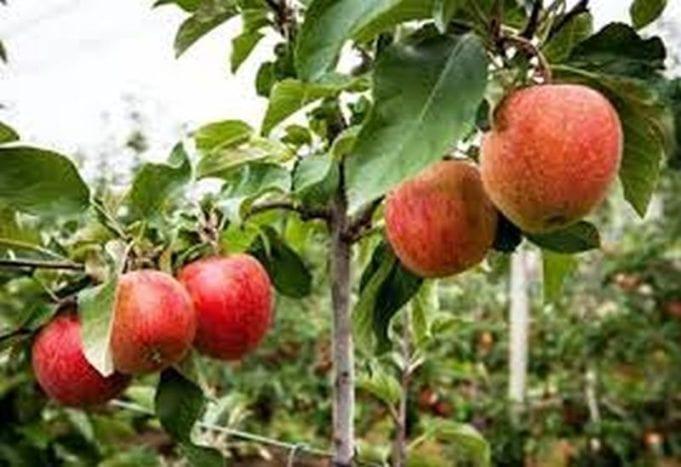 Εορδαία: To καλάθι του χειμώνα με άγρια φρούτα γεμίζουν οι «Σπορίτες»