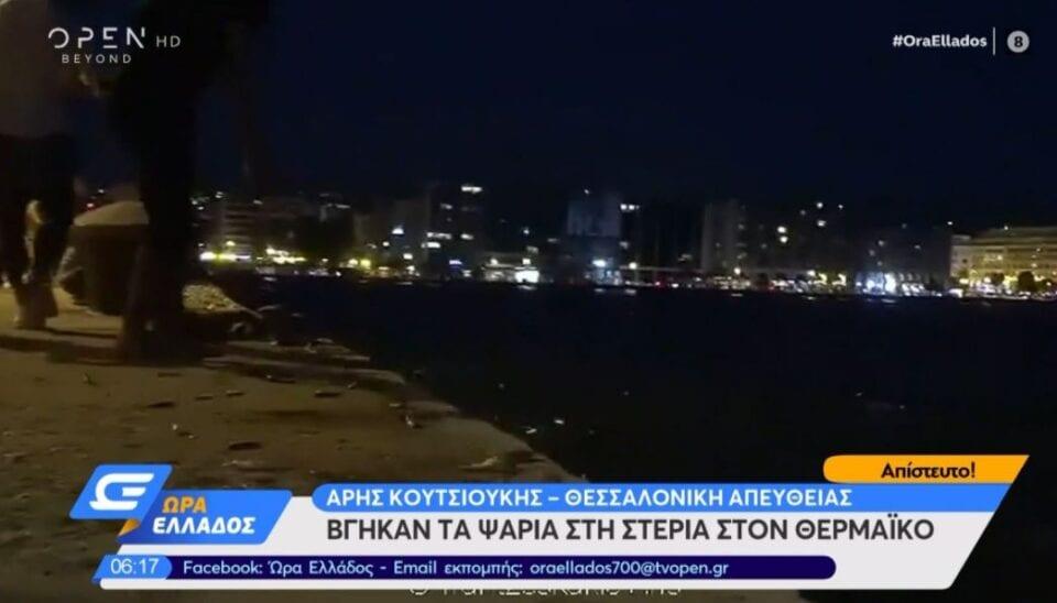 Σπάνιο φαινόμενο στη Θεσσαλονίκη: Δεκάδες ψάρια πήδηξαν και βγήκαν μόνα τους στην στεριά (βίντεο)