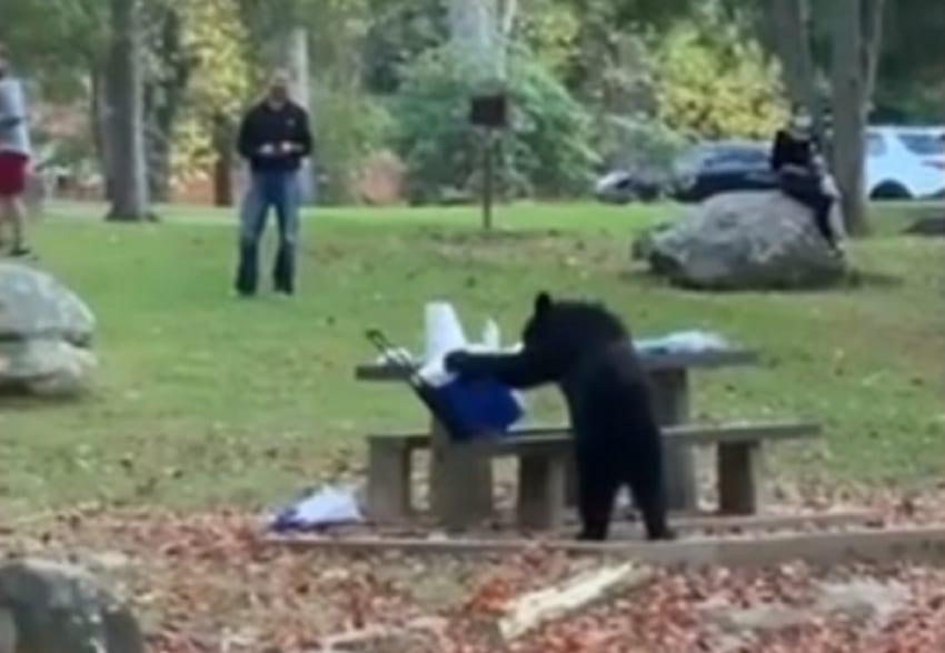 Αρκούδα έκλεψε φορητό ψυγείο από παρέα που έκανε πικ νικ