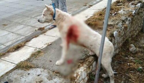 Κακοποίηση σκύλου: Καθηγητής τον μαχαίρωσε στη μέση μέση του δρόμου