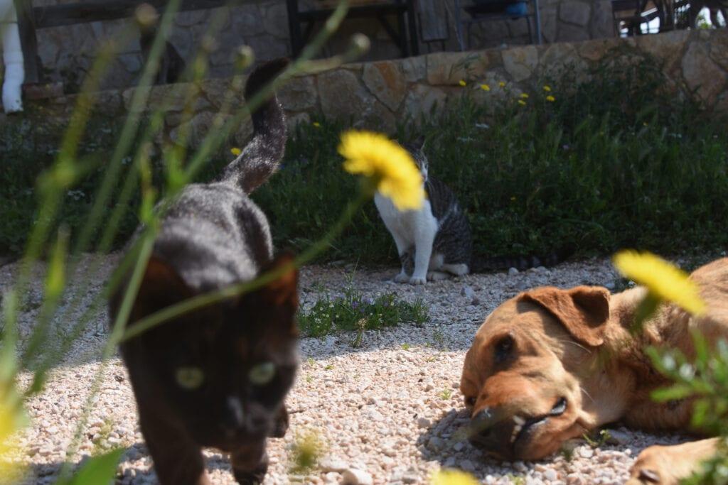 Υπ. Αγροτικής Ανάπτυξης: Ο βασανισμός ζώου μετατρέπεται σε κακούργημα
