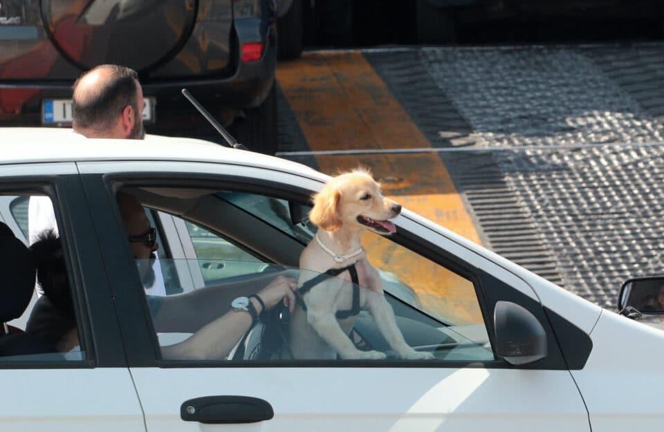 Απαγόρευση κυκλοφορίας: ΙΧ και σκυλιά -Τι ισχύει για τις βόλτες και το αυτοκίνητο 1