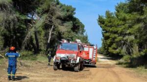 ΟΑΕΔ: 700 προσλήψεις σε δασικές υπηρεσίες μέσω του προγράμματος κοινωφελούς εργασίας