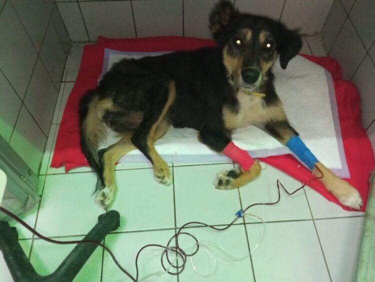 Συγκίνηση στον Βόλο: Σκύλος έγινε εθελοντής αιμοδότης!
