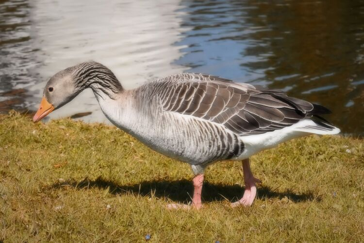 Καστοριά: Κρούσμα γρίπης των πτηνών σε άγριο πτηνό