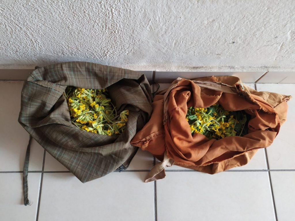 Σύλληψη δύο ατόμων σε περιοχή του ορεινού όγκου της Καστοριάς για παράνομη συλλογή ποσότητας αρωματικού-θεραπευτικού φυτού