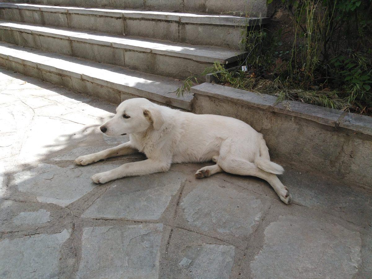 Tο εικονιζόμενο αδεσποτάκι, 7-8 μηνών-, το έφερε σήμερα στον κτηνίατρο Georgios Chastas, ο Βασίλης (δεν ξέρω τίποτε περισσότερο για αυτόν, αλλά τον θαύμασα αφού ακόμη και την τροφή που προσέφερε ο γιατρός, θέλησε να την πληρώσει.... κι όταν ρίξαμε την τροφή μπροστά στο γραφείο μου, αφού ο «μούργος» έφαγε, ζήτησε σκούπα να καθαρίσει... -ΕΥΓΕ ΒΑΣΙΛΗ!- ....-φυσικά και δεν... εγώ....-ούτε ο γιατρός....-).... Το άσχημο; Το συγκεκριμένο σκυλάκι (το οποίο είναι πολύ φιλικό), ΦΕΡΕΙ ΤΣΙΠΑΚΙ του ΔΗΜΟΥ ΕΟΡΔΑΙΑΣ!!!!!